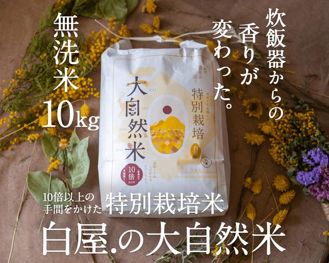 [送料無料]大自然米【10kg】無洗米