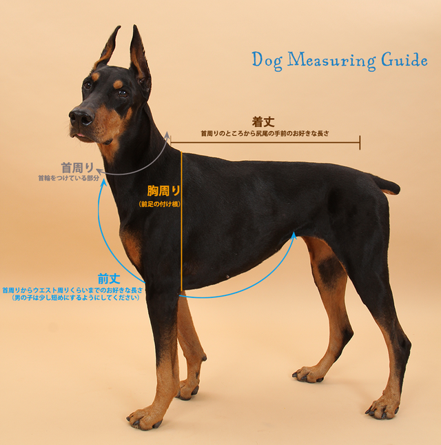 ダルメシアン変身タンクトップ(リブニットタイプ・小型犬サイズ)【送料無料】