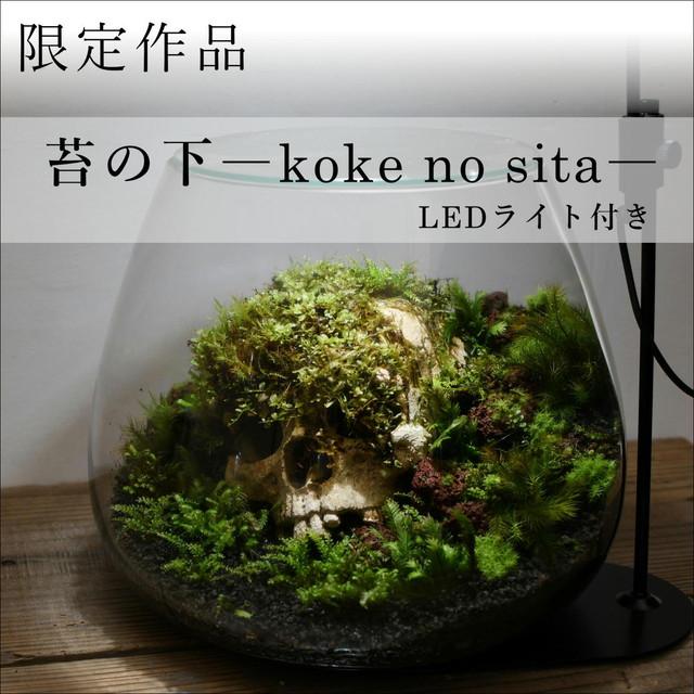 作品名− 苔の下 −【苔テラリウム・現物限定販売】20.05.1#6 ◆LEDライト付き