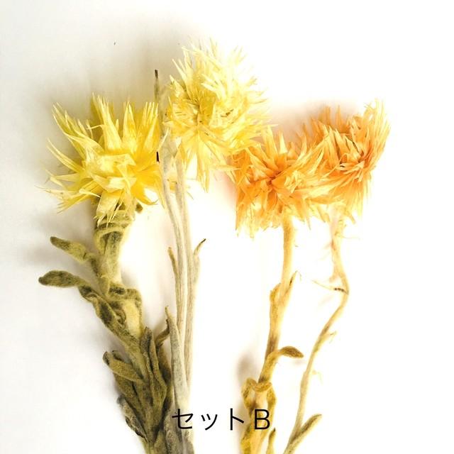 【花材・プリザーブドフラワー】ミニシルバーデージー セットB