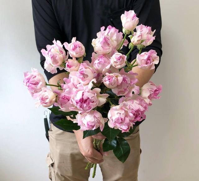 ※市場直送便! FINEROSE 10本 ★SPバラ 品種名:シーアネモネ 大きくウェーブしたユニークな花形