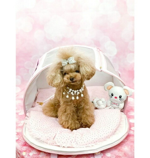 【即納】FOR PETS ONLY ARIABAG PINK IVORY (PE2021-B2・B1)MINI