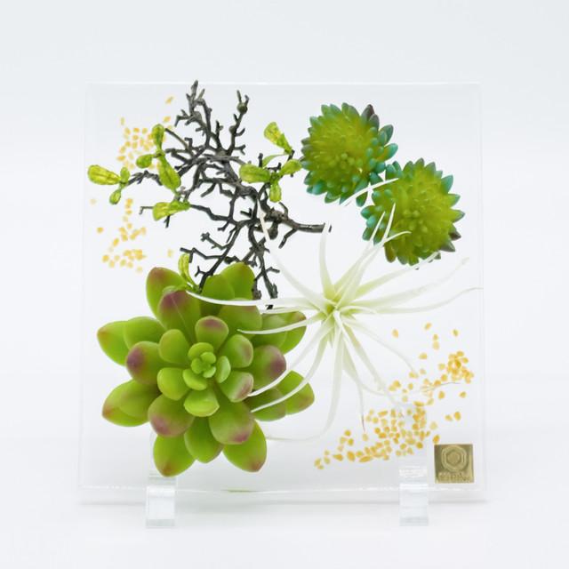 sumika square 多肉植物