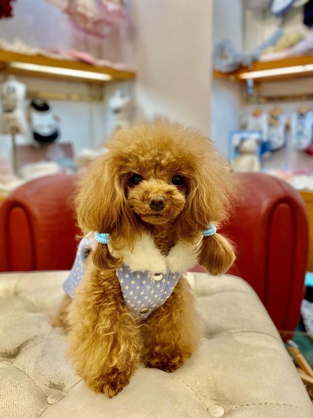 【即納】犬の生活 キルティングベスト ツイード ホワイトカメリア リバーシブル