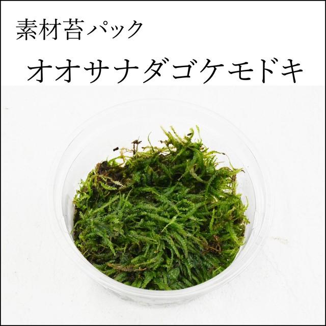 オオサナダゴケモドキ 苔テラリウム作製用素材苔