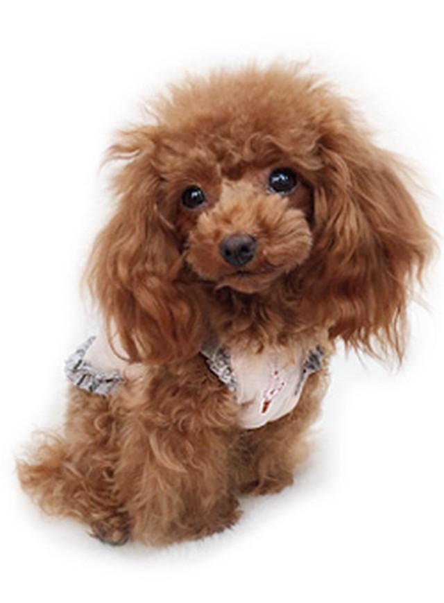 犬の生活 17SS フリルキャミワンピ スマイリー