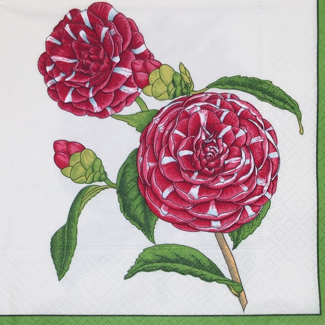 【Caspari】バラ売り1枚 ランチサイズ ペーパーナプキン GRANDIFLORA クリーム