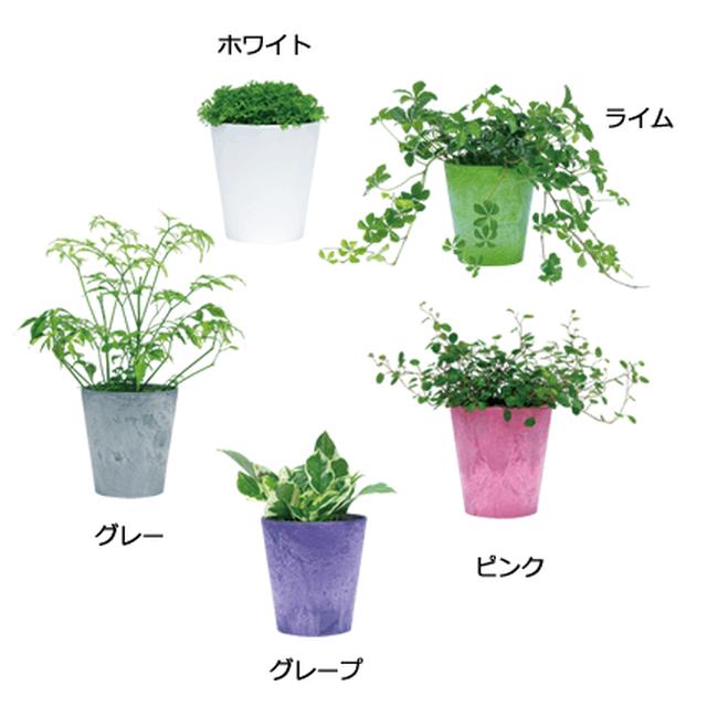 ミニ観葉植物・同種2個セット 選べるカラーポット