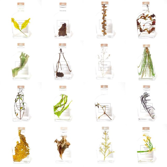 【百の植物片-京都で採集された植物の肖像-】