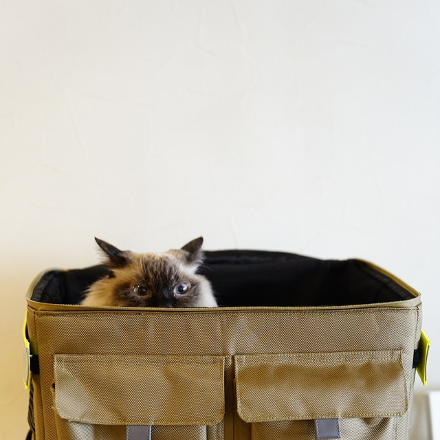 ROOT CARRY BACKPACK ルートキャリーバックパック