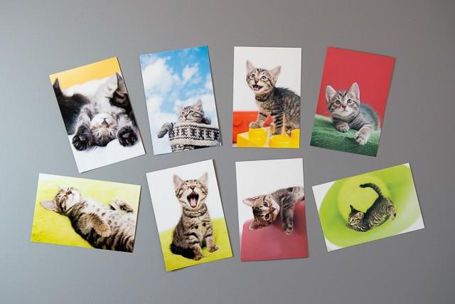 キジトラ猫 ポストカードセット【いろ】