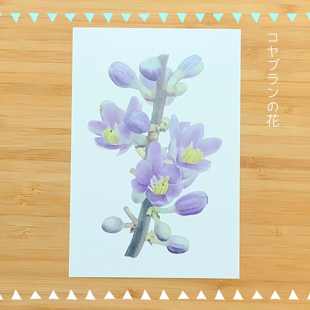 江戸東京野菜ポストカード Cセット