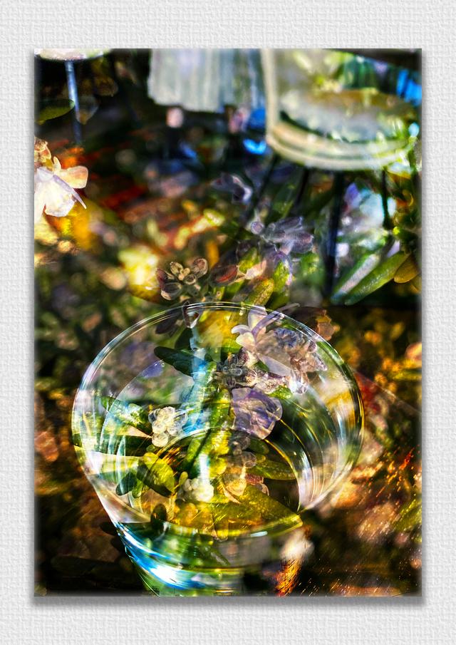 フォトアクリル「White roses」