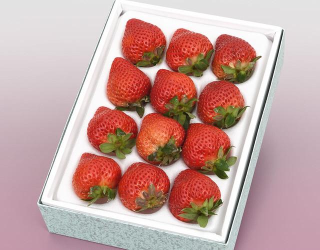 博多あまおう〔送料無料、あまおう、いちご、苺、詰め合わせ、贈答用〕