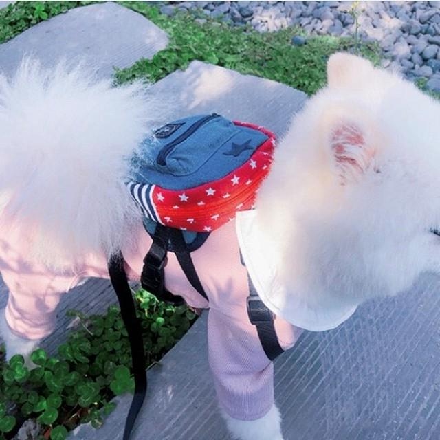 チェックシャツが可愛い ロンパース S~ M 犬の服  猫の服  オールインワン ペット服  わんこ服 ペットウェア 可愛い犬服