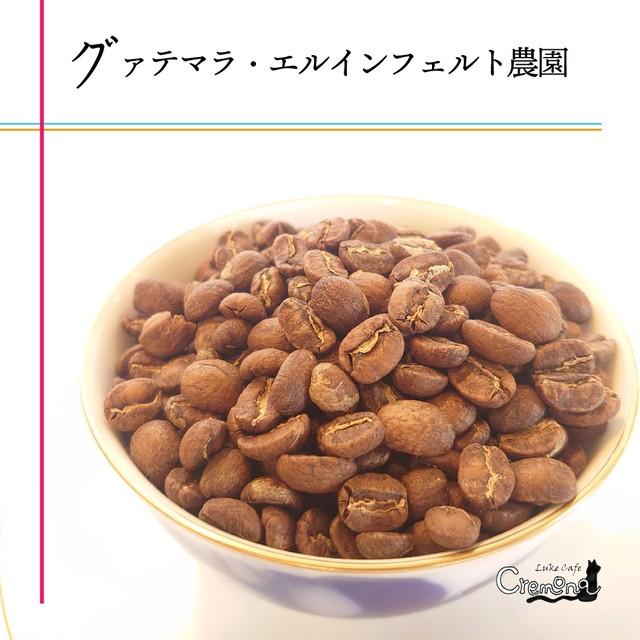 グァテマラ・エルインフェルトウノ農園|【ローストラボ・クレモナ】自家焙煎珈琲豆