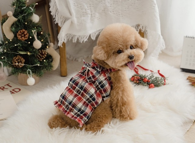 【VELY&MORE】Merry Check Top