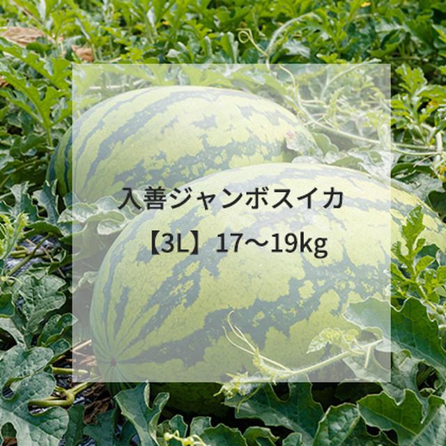 入善ジャンボスイカ【3L】17~19kg(送料込/税込)