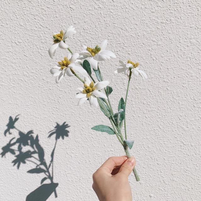 mini flower/エーデルワイス