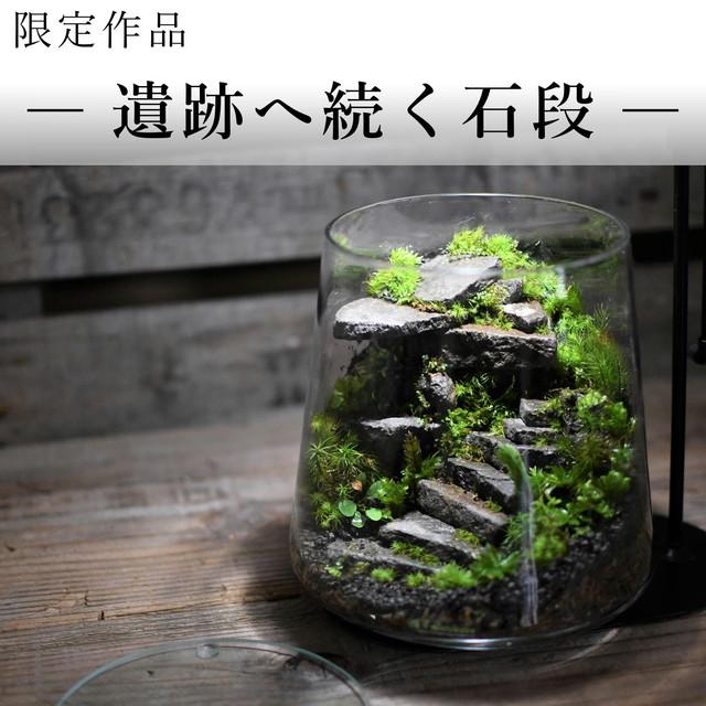 苔景−遺跡へ続く石段 −【苔テラリウム・現物限定販売】20.06.28#3