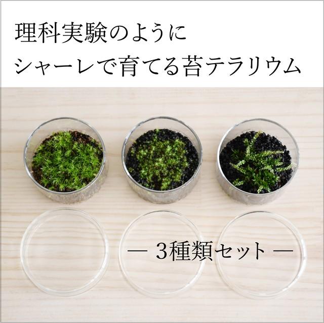 【実験のように楽しむ 苔テラリウム】 ミニシャーレ3種set