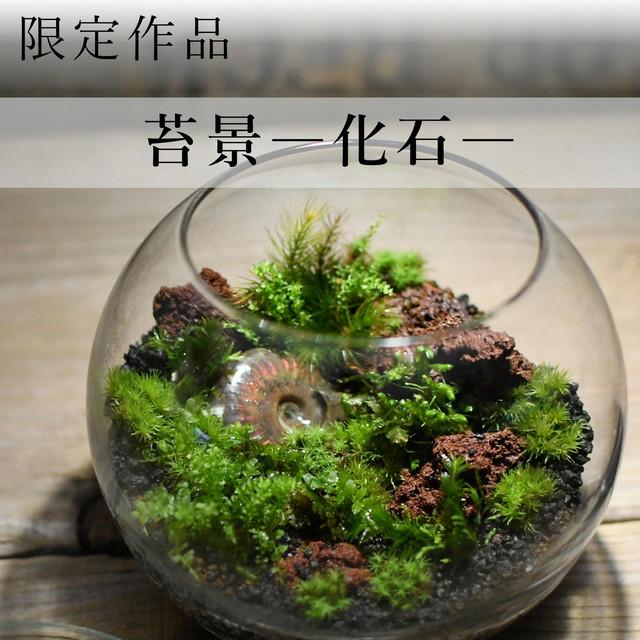 苔景 − 化石 −【苔テラリウム・現物限定販売】12.1#2