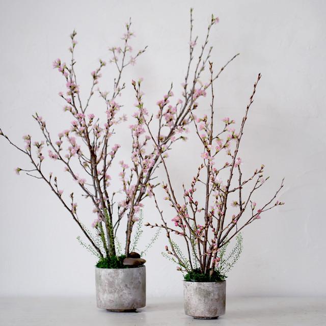 【予約商品】贈って自分にも届く!桜のお花見キットダブル