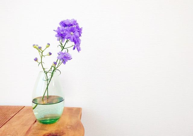 Amelie Glass アメリーグラス E-GR