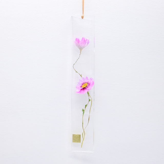 dried flower S ローダンセ ピンク 限定 S