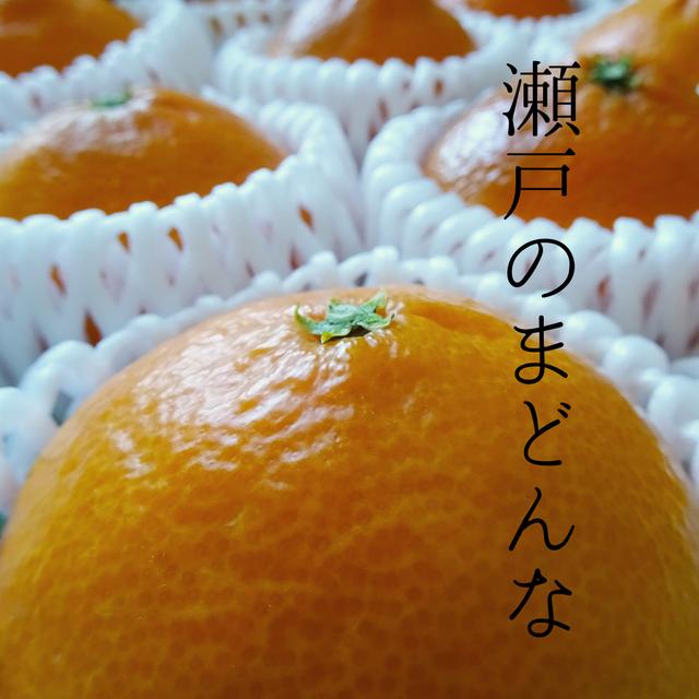 【送料無料】奇跡の味!「瀬戸のまどんな」3kg箱(10〜12玉) | 紅まどんなと同品種 柑橘 みかん 愛媛 大三島