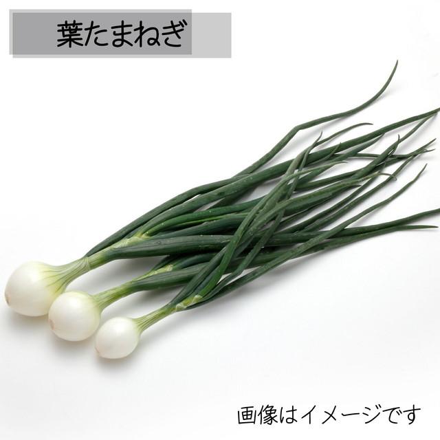 葉たまねぎ 朝採り直売野菜 4月20日発送予定