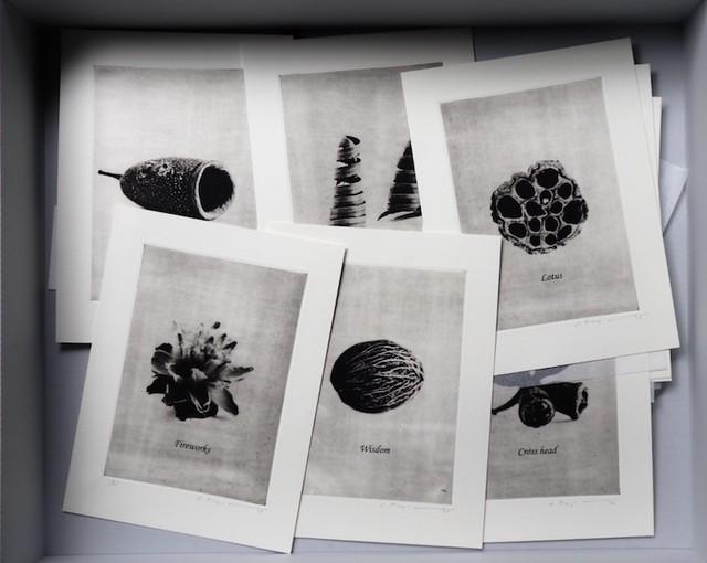 藤田修  版画集 「Plant collection」