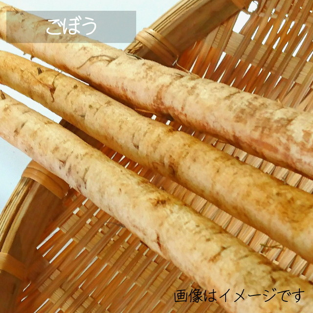 11月の朝採り直売野菜 : ゴボウ 1~3本 新鮮な冬野菜 11月28日発送予定
