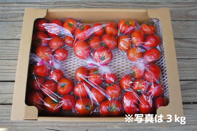 【最終SALE】送料無料!まとめ買い☆ご家庭用フルーツトマト☆お得な業務用箱入り☆約6kg☆ご自宅用 高糖度トマト