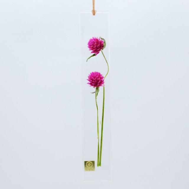 dried flower S センニチコウ カーマイン