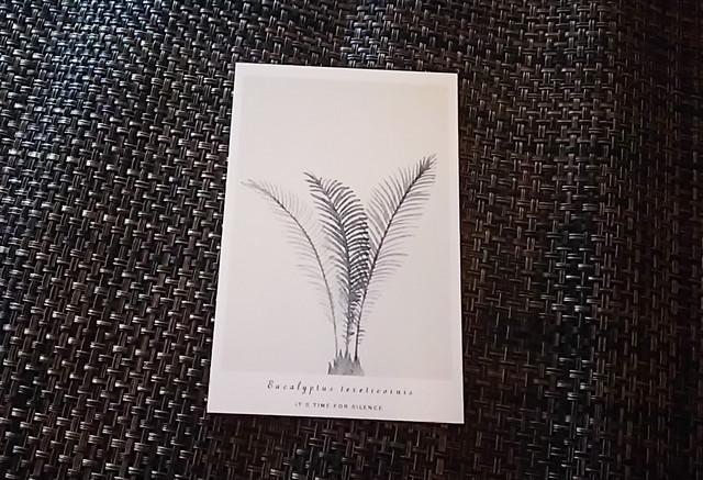 ポストカード 植物 H