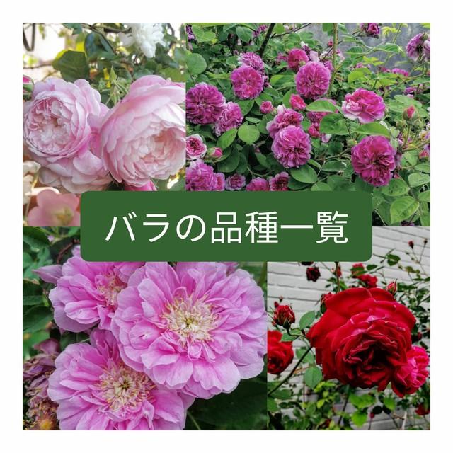 当園保有バラ品種一覧