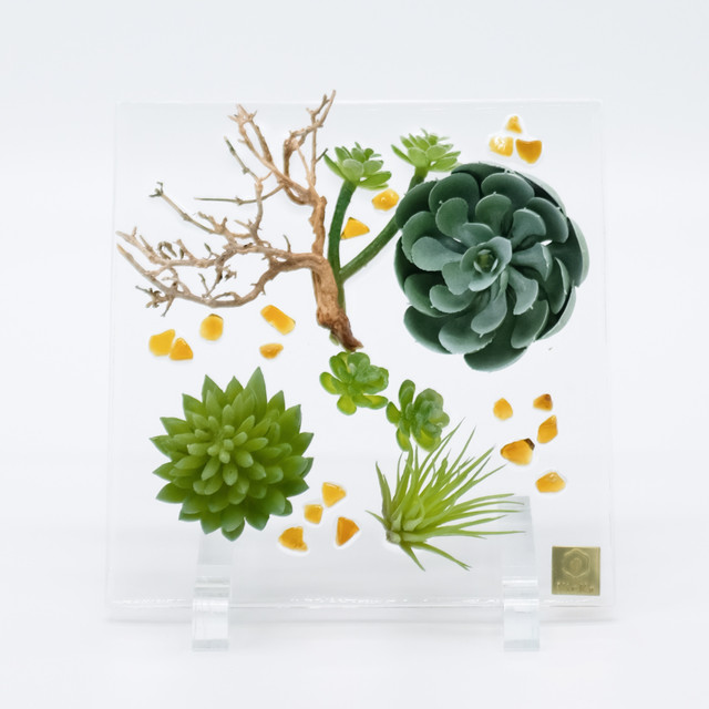 sumika square 多肉植物+ナチュラルブッシュ