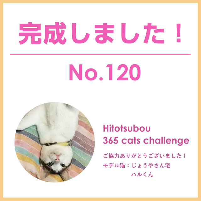 Hitotsubou 365 cats challenge No.120【ご協力者様限定販売】