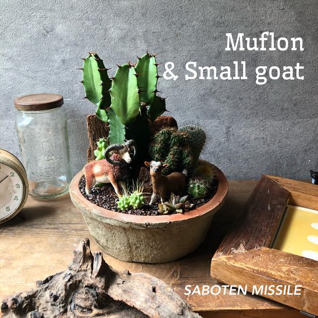 Muflon & Small goat