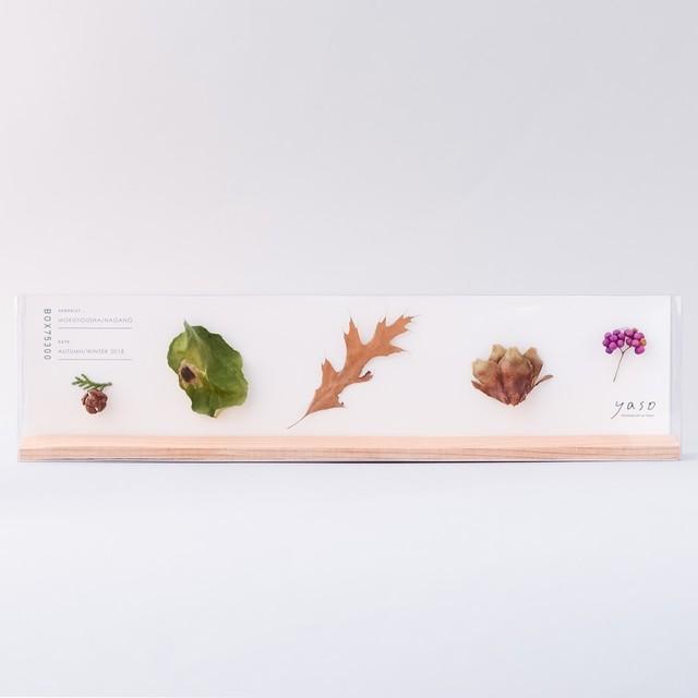f1281_ヒノキ、ツルウメモドキ、ピンオーク、チョウセンゴヨウマツ、コムラサキ