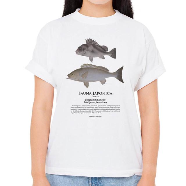 【イサキ・コショウダイ】シーボルトコレクション魚譜Tシャツ(高解像・昇華プリント)