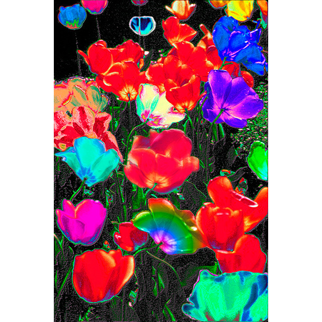 Photo-CG - Tulip 7 - Original Print A2 Size