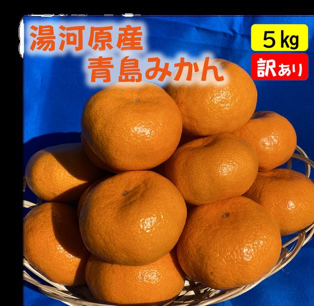 送料無料 青島みかん5kg(秀品)