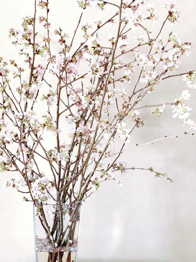 【3/27発送、送料込】さくらの花束