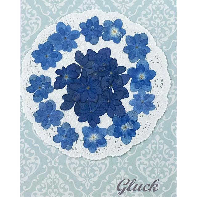 コンパクト押し花  押し花 八重あじさい(ナチュラルブルー)22枚をパックにしてお届け! 自然色のブルー&デニムカラー