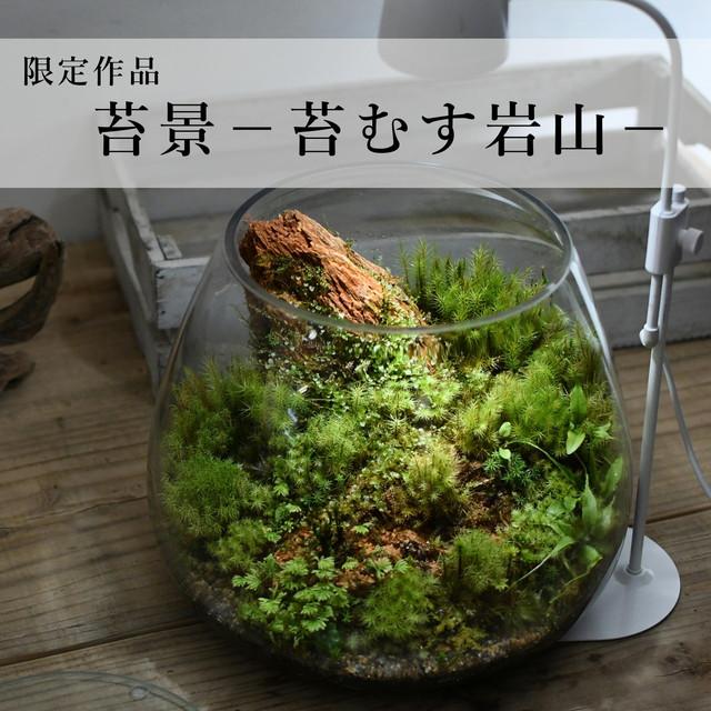 苔景−苔むす岩山−2021.3.31#5【苔テラリウム・現物限定販売】