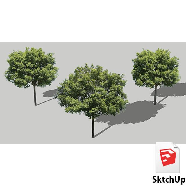 樹木SketchUp 4t_005 - メイン画像