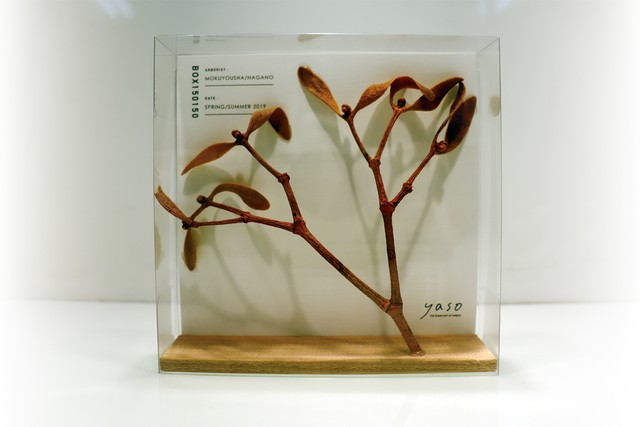 [yaso]yaso BOX 植物見本 セイヨウヤドリギ