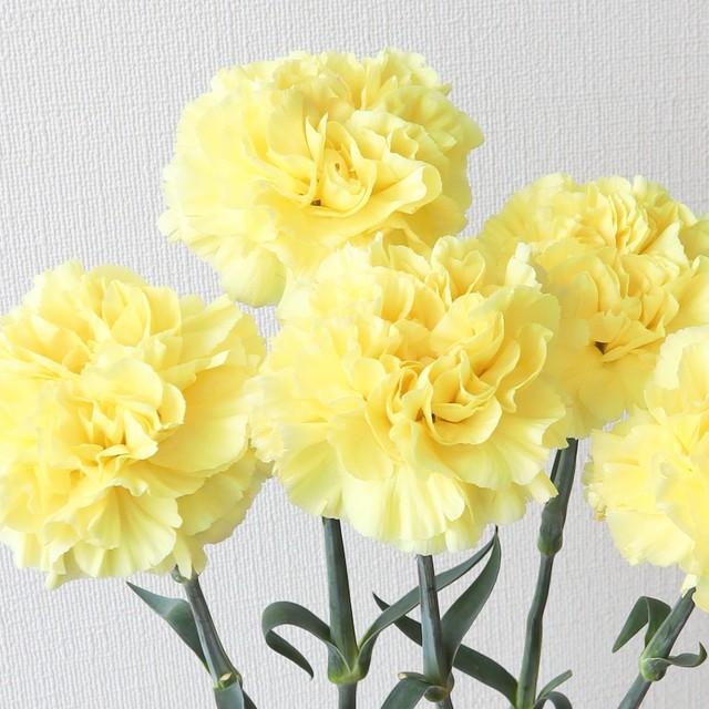 母の月特集! 母の月 カーネーション 真鍋農園『レモンミナミ』(黄色)
